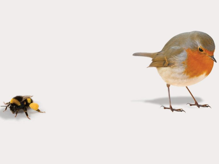 a bumble bee and a bird stand next to each other