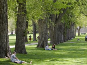 students sit on the oval at csu